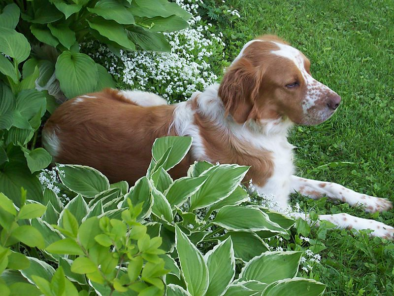 Carson in flower bed 2