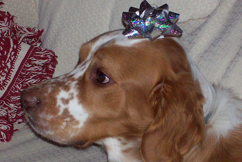 Gift dog
