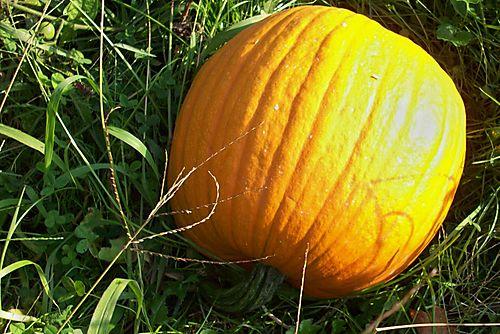 Second pumpkin
