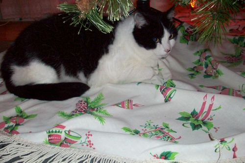 Polly on the tree skirt