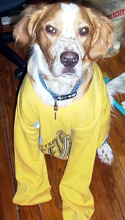 Carson in steelers shirt