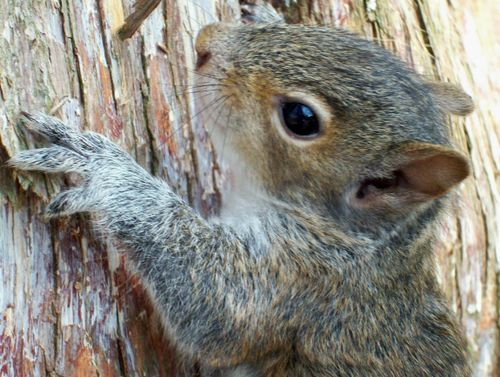 Squirrel really cute