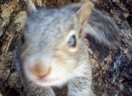 Squirrel very close