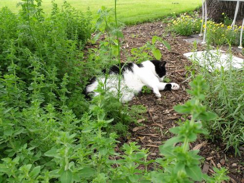 Patch in garden