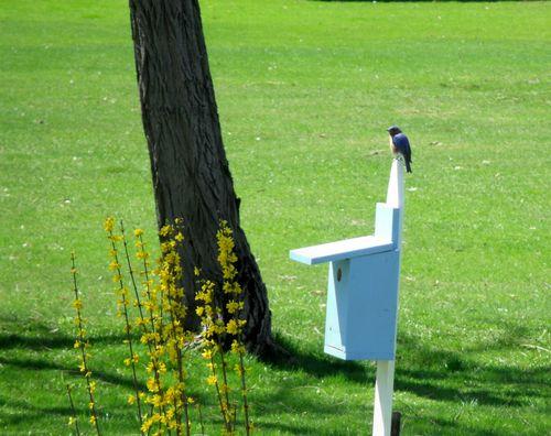 Bird on one box