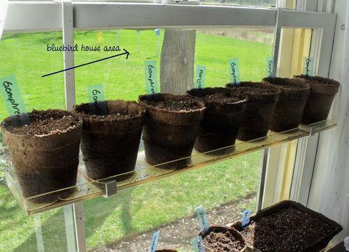 Plants2 w birdhouses
