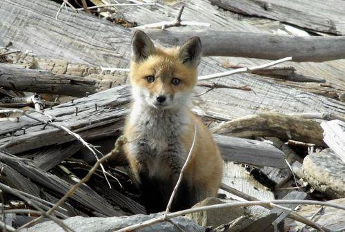 Fox closer
