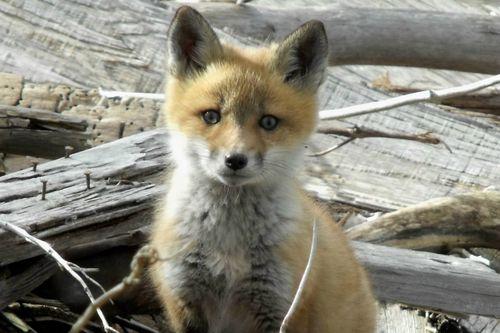 Fox even closer