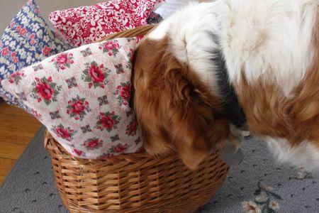 Head in basket
