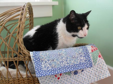 Patch in cradle
