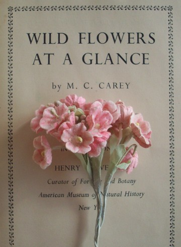 Wild_flowers_at_a_glance